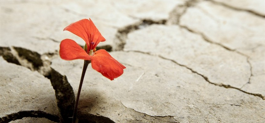 Signs of Life in the Midst of Death