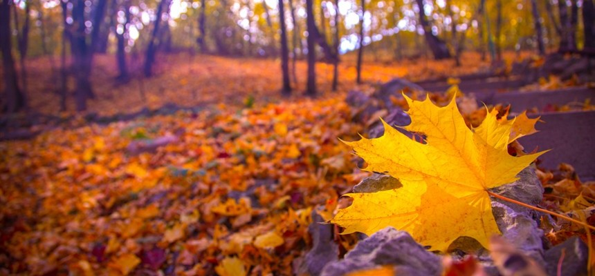The Autumns of Our Lives: The Transformation of Seeds Sown in the Soil of Trials
