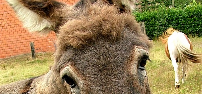 I'll Be Your Mule If You Will Be My Donkey