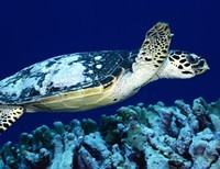 """Roe v Wade—46 years later hurting Baby Turtles is illegal but, in America, killing Baby People is a """"guaranteed right."""""""