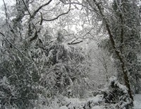 Why we'll always need Narnia