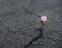Growing Spiritual Resilience