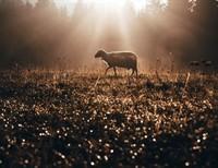 Christian Leaders, Nourish Your Sheep