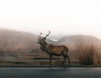 My first buck (deer)....