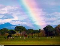 Rainbow of Tenderness