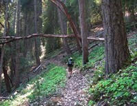"""Moral Relativism and """"Wild: From Lost to Found on the Pacific Crest Trail"""" by Cheryl Strayed"""